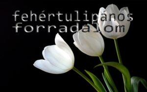 budapesti fehér tulipános forradalom